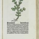 Schoeffer, Peter - Herbarius Latinus
